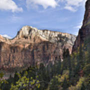 Trees in Zion National Park Art Print