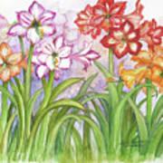 Amaryllis Garden  Art Print