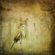 Australian Reed Warbler Art Print