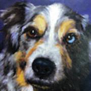 Blue Merle Dog Portrait Art Print