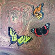California Butterflies Art Print