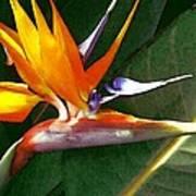 Crane Flower Art Print