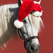 Equine Santa Horse Funny Clause Red Christmas Art Print