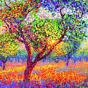 Evening Poppies Art Print