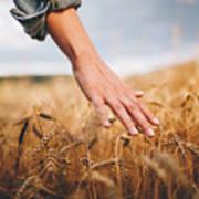 Golden wheat fields Art Print