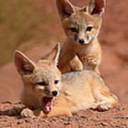 Kit Fox Twin Pups Art Print
