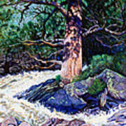 Old Pine In Rushing Stream Art Print