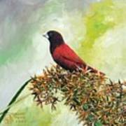Philippine Bird 4 Art Print