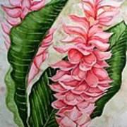 Pink Ginger Lilies Art Print