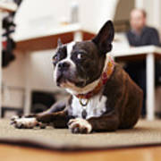Portrait of curious dog lying on rug in an office Art Print