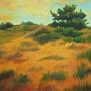 Province Lands Cape Cod Art Print