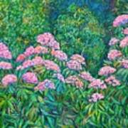 Rhododendron Near Black Rock Hill Art Print