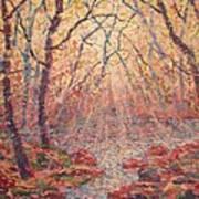 Sun Rays Through The Trees. Art Print