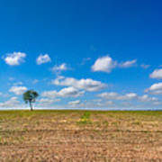The loneliness of the tree in the middle of the soy plantation in the rural area of Piracicaba. Art Print