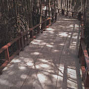 The way in Mangrove forest, Thailand Art Print