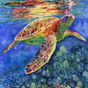Turtle Reflections Art Print