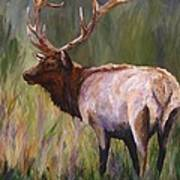 Whapiti - ELK Now Avaliable  Art Print