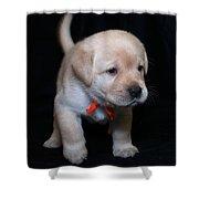 4 Week Old Lab Puppy Shower Curtain