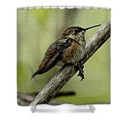 A Little Tired Hummingbird Shower Curtain