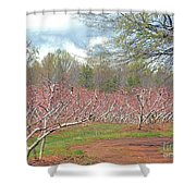 A Peach Orchard   Shower Curtain