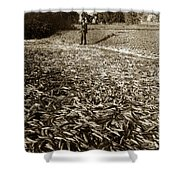 A Run Of Squawfish Stranded In Kelsey Creek Near Kelseyville Lake County April 29 1899 Shower Curtain