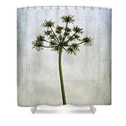 Aethusa Cynapium Shower Curtain