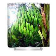 Banana Plants Shower Curtain