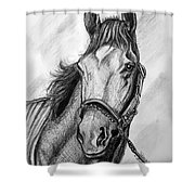 Barbaro Shower Curtain by Patrice Torrillo