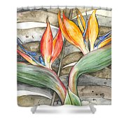 Bird Of Paradise 04 Elena Yakubovich Shower Curtain