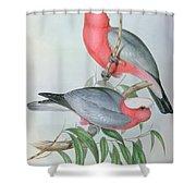 Birds Of Asia Shower Curtain