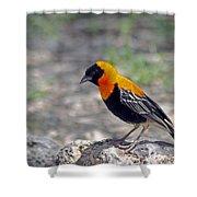 Black Bishop Weaver  Shower Curtain