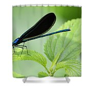 Black Winged Damselfly 7261 Shower Curtain