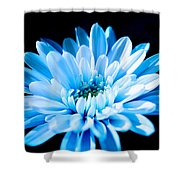 Blue Chrysanthemum Shower Curtain