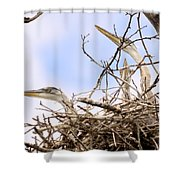 Blue Heron Rookery 7214 Shower Curtain
