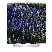 Bluebonnets In The Limelight Shower Curtain