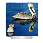 Blues Pelican Shower Curtain