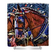 Budwieser Clydesdale Shower Curtain