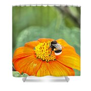 Bumble Bee 01 Shower Curtain