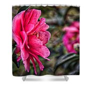 Camellia De Mamie Shower Curtain