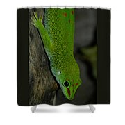 Climbing Giant Day Gecko Shower Curtain