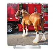 Clydesdale At Esp Shower Curtain