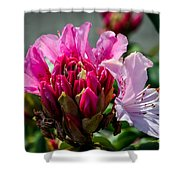 Coast Rhododendron Shower Curtain