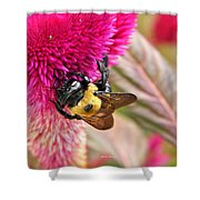 Cockscomb And Bumble Bee Shower Curtain