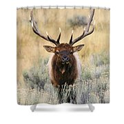 Coming Head On Shower Curtain