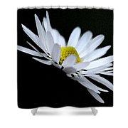 Daisy 4 Shower Curtain
