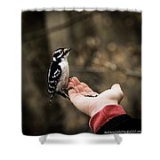 Downy Woodpecker In Hand Shower Curtain