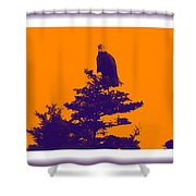 Eagle Scout At Sunset Shower Curtain
