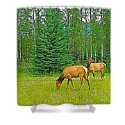 Elk Near Wapiti Campground In Jasper Np-alberta Shower Curtain