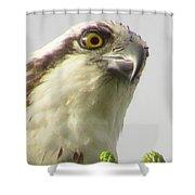 Eye Of The Osprey Shower Curtain