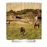 Feral Horses Of Ocracoke Shower Curtain